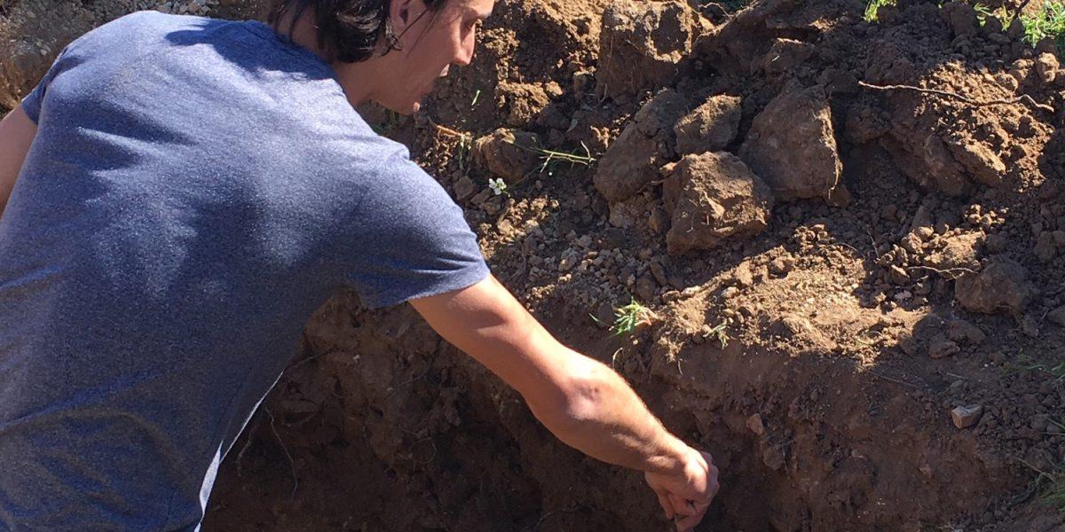 L'enherbement en viticulture pour protéger les sols.